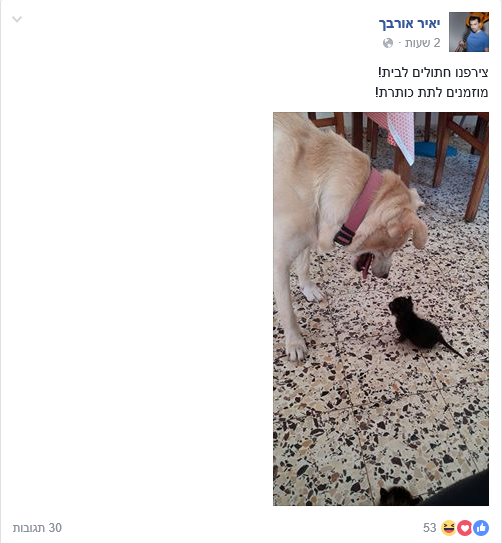 יאיר אורבך מאמץ. צילום: פייסבוק.