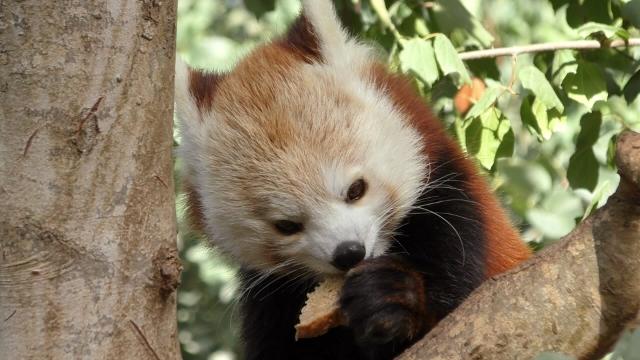 """אז מה אוכלים היום בגן החיות התנכ""""י?"""