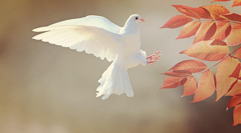 """""""רעה היא מלחמה, רעה ומאוסה, אבל האנשים במלחמה יפים לעתים יותר מאשר בחיי יום-יום"""" (זאב ז'בוטינסקי)"""
