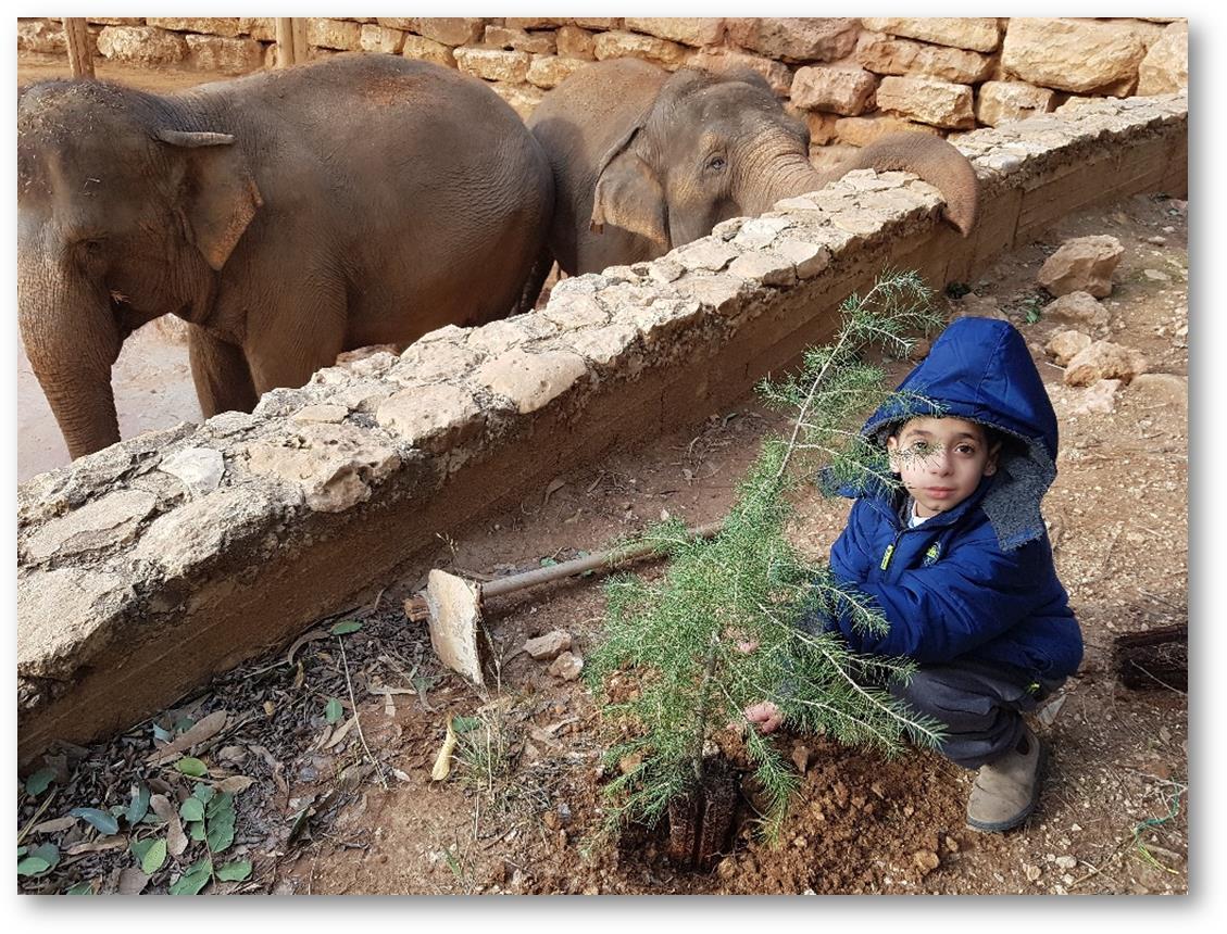 """על שתילים ופילים:ט""""ו בשבט בגן החיות התנ""""כי בירושלים"""