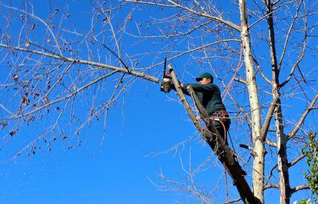 5 דברים שיגרמו לכם לוותר על כריתת עץ בעייתי