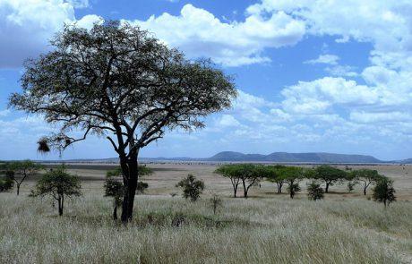 טיול לטנזניה – אל תוך הפרא הלא נודע