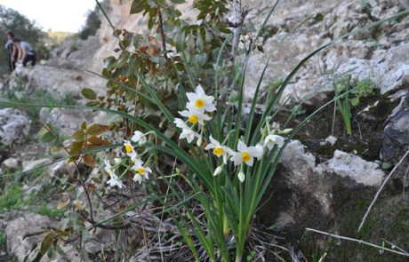 להתאהב בפרחי ארץ ישראל