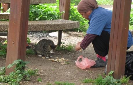 """דעה:""""מה אתם יותר אוהבי חתולים או שונאי דתיים?"""""""