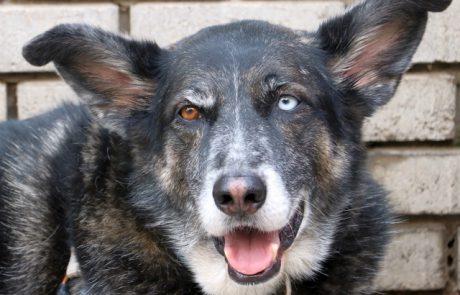 עין הכלב